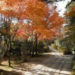 たまには自然鑑賞もしよう!ゲームで見られる紅葉の風景を大特集!